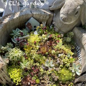 DIY★梅雨終わったけど今更ながら多肉花壇に屋根がつきましたw