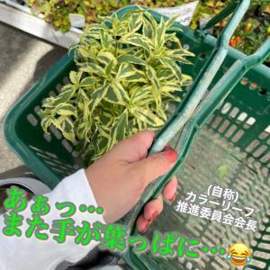 昨日お迎えしたお花(?)たち&ローソン低糖質パン勝手にランキング