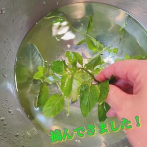 30秒で出来る!お庭のハーブを使った和梨のデザート簡単レシピ