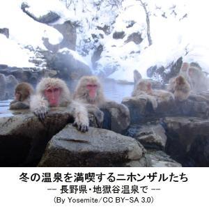 102  4.ドゥンマン温泉はモンキー王国