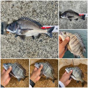 【釣行記】淡路島の新地開拓は成功!年無しは釣れなかったけど良型チヌをゲット!