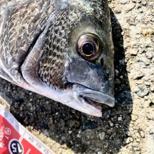 釣りで魚を釣るために必要なものは「場所・エサ・技術」の順番です。