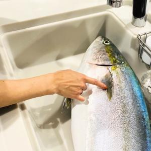 大きなお魚頂きました♪