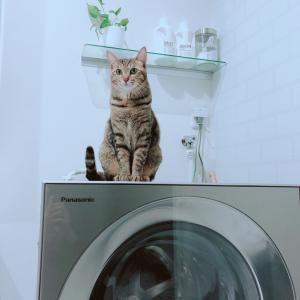 新しい洗濯機がスゴイ!
