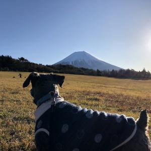 富士山を愛でる。