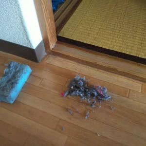 水拭き3日め:和室の畳を水拭きしました