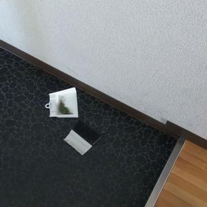 水拭き13日め:トイレ、玄関の水拭きをしました