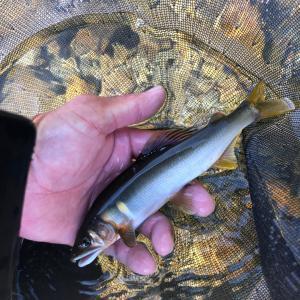 '19.10.5鮎釣り35