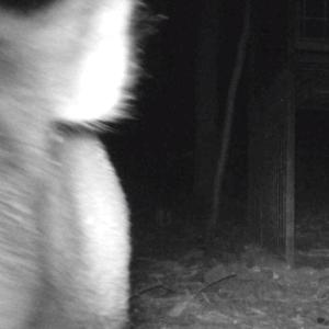 【罠猟】初心者必見!トレイルカメラで罠猟は3倍楽しくなる!