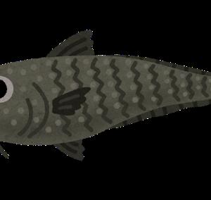 一番かっこいい魚の名前wuwuwuwuwuw