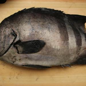 【画像】うまそーな魚買ってきた!!