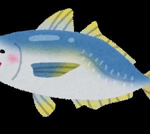 ルアートッモ「うおおおおお」→アジ2匹  餌釣りワイ「ふんっ」→クサフグ12匹