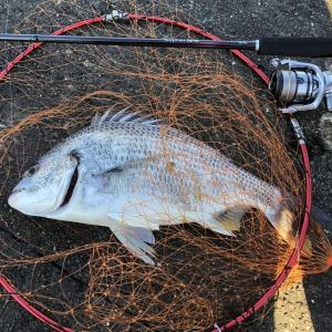 【画像】朝チニングからの管釣りしてきた