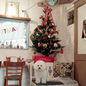 素敵な首輪とリード☆ドッグカフェ