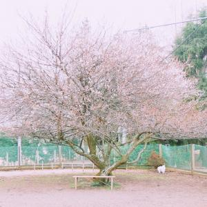 梅の咲くドッグランで爆走する。