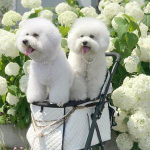 アナベルの思い出♪値下げレスキューのお花たち