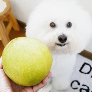 """巨大な梨""""かおり''♪可愛いスマホスタンド☆秋めく庭"""