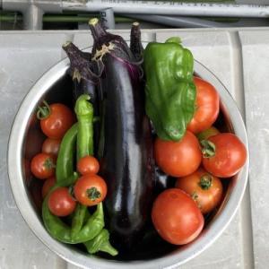 うれしい、収穫と父の日