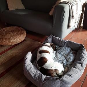 関節持ち犬と飼い主の戦い