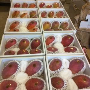アップルマンゴーご注文受付終了です。