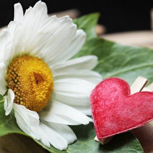 マーガレットの花言葉。花占いは必ず○で終わるって本当?