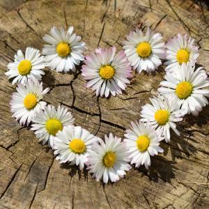 ヒナゲシ(ポピー)は怖い・毒性のある危険な花?由来を調査!