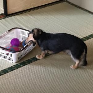 大掃除は暴れ犬との戦い