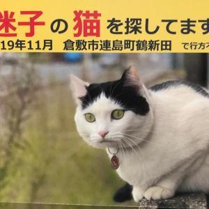 迷子の猫に心当たりありませんか?