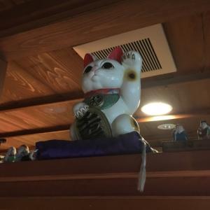 渥美半島の宿の猫