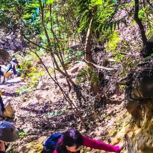 ローカルルートで荒地山〜毎日登山~