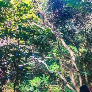 布引の滝周辺の紅葉が~毎日登山~