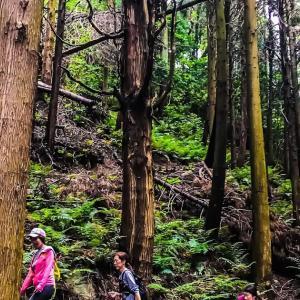森をジックリ歩いて~毎日登山~