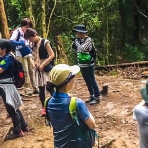 夕暮れハイク②「ゆっくり森を歩いて夜の森を知ろう」~毎日登山