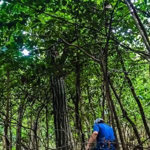 篠山の森は深くて~(森を整備してアクティビティゾーンに①)