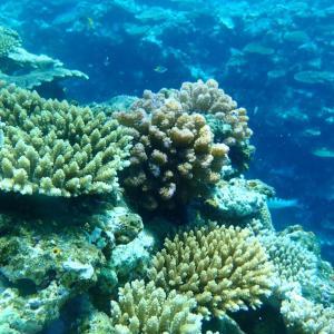 太陽+海+サンゴ=最高で綺麗な旅//サマードリーム石垣島日記