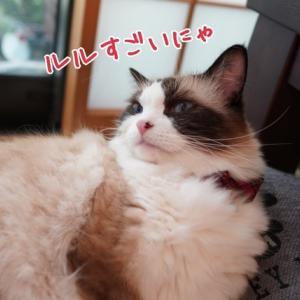 急に自信がつきだした飼い主と相変わらずのんきな愛猫と(;´∀`)