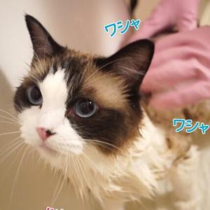 夏だ!猛暑だ!お風呂の日だぁー!ヽ(´▽`)/