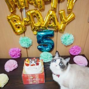 ルルちん5歳の誕生日(*´ω`*)