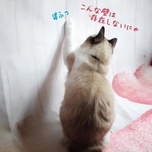 5歳誕生日パーティーの裏側(;´Д`)