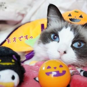 ハロウィン2020(*´ω`*)