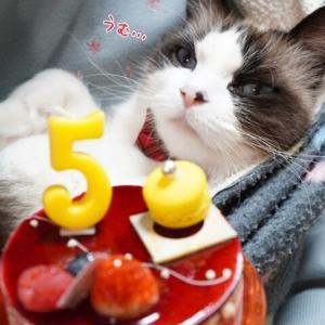 5thうちの子記念日(*´ω`)