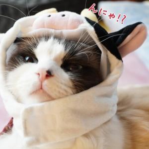 年賀状撮影の裏側その②~今年は猫年?丑年?~と、下僕が仕事がしたくない理由(/ω\)