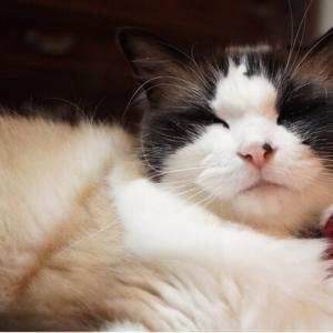 5歳8ヵ月の日もぶれない愛猫(;´∀`)