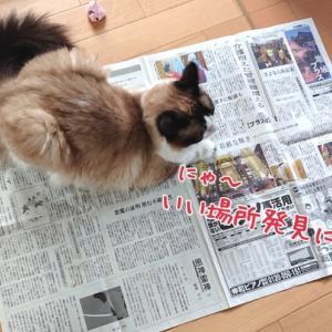 孤独につっつく飼い主と他人事の愛猫(;´Д`)