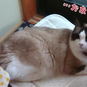 猫飼い必見(!?)愛猫と45日ぶりに再開したときの愛猫の反応は?(;´∀`)