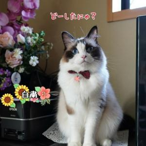 ♪ちゃんちゃかちゃんちゃん ちゃちゃんちゃちゃんちゃん♪(←小梅太夫になりきり中)