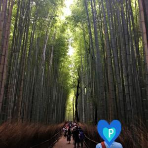 ピコ家の夏休み→<大阪・京都>嵐山の「天龍寺」と「竹林の小径」。