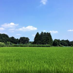 東北ツーリング(10) <福島西部広域農道>果物とお米とツキノワグマ!?