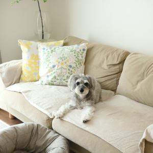 白いフワフワのお犬様