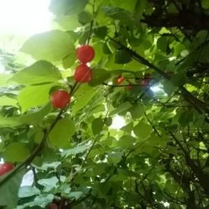 パッとしない庭に赤い彗星参上